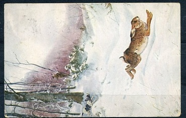 "Real mailed card "" hare"", 1916"